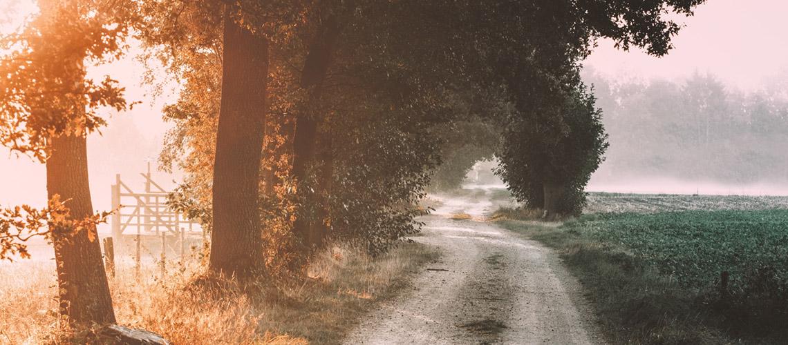 Die Herbsttage ziehen vorbei, der Winter naht.